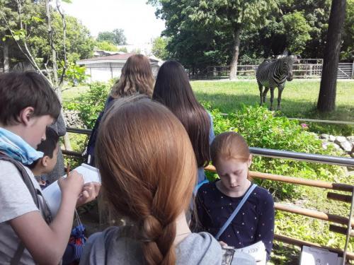 Пленэр в Зоопарке